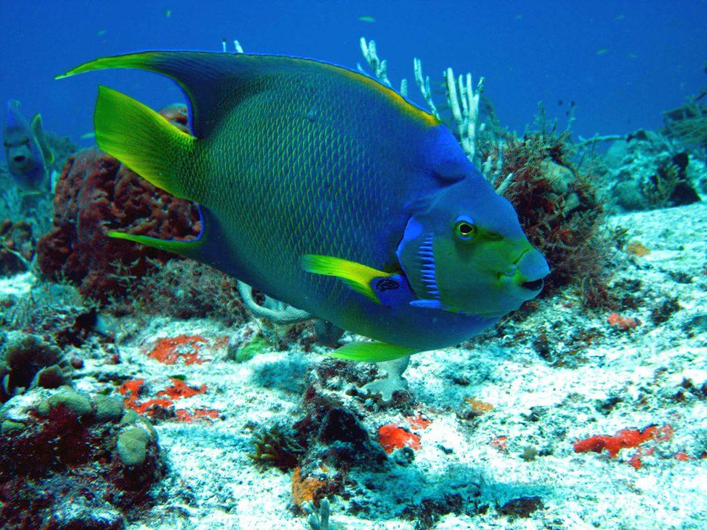 snorkel Mahahual